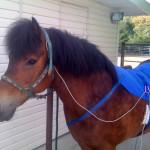 uj-Horse-Blanket-2